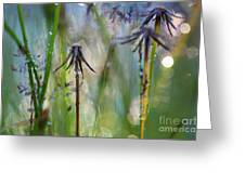 Dandelions Close-up Greeting Card