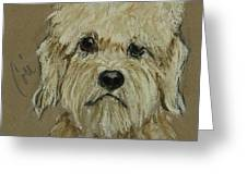 Dandie Greeting Card