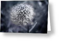 Dandilion Greeting Card
