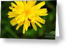 Dandy Lady Bug Greeting Card