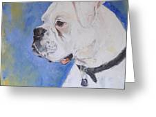 Danger The White Boxer Greeting Card