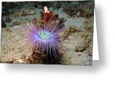 Dangerous Underwater Flower Greeting Card