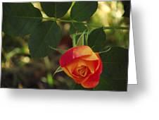 Dangling Rose Greeting Card