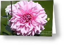 Danielle's Dahlia Greeting Card