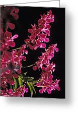 Danrobium Orchids Used To Make Lais Greeting Card