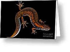 Danube Crested Newt Greeting Card