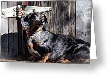 Dapple Dachshund Greeting Card