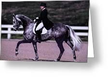 Dapple Grey Dressage Greeting Card