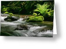 Dappled Green Greeting Card