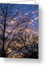 Dappled Sunset-1547 Greeting Card