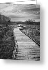 Dark Appalachian Trail Greeting Card