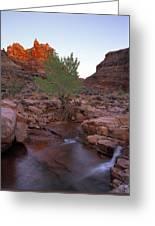 Dark Canyon Creek Greeting Card