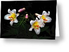 Dark Day Bright Lilies Greeting Card