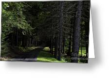Dark Forest Road Greeting Card