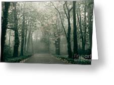 Dark Gloomy Alley In Woods Greeting Card