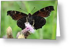 Dark Knight Dark Side Of A Peacock Butterfly In Ireland Greeting Card