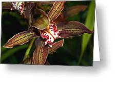 Dark Orchid Greeting Card