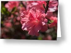 Dark Pink Azalea Greeting Card
