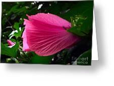 Dark Pink Beauty Greeting Card