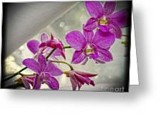 Dark Pink Orchids All In A Row Greeting Card by Eva Thomas