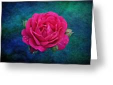 Dark Pink Rose Greeting Card