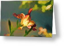 Dark Red Day Lily With Sun Shining Through I Abstract I Greeting Card