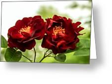 Dark Red Roses Greeting Card