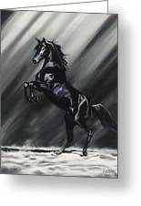 Dark Splendor Greeting Card by Kim McElroy