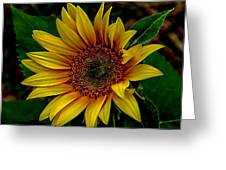 Dark Sunflower Greeting Card