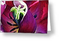 Dark Tulip Macro Square Format Greeting Card