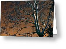 Dark Woods II Greeting Card