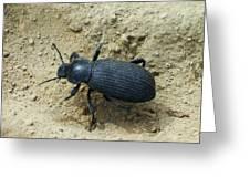 Darkling Beetle In Sand Greeting Card