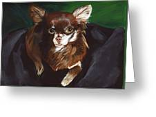 Darla Chihuahua  Greeting Card