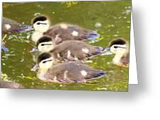 Darling Ducklings  Greeting Card