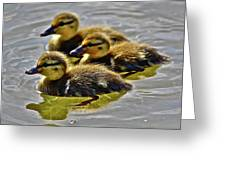 Darling Ducks Greeting Card