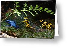 Dart Frogs On The Move Greeting Card