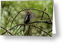 Darter At Rest Greeting Card