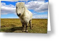Dartmoor Pony Greeting Card
