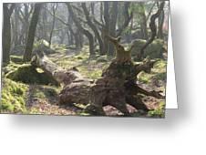 Dartmoor Woods Greeting Card