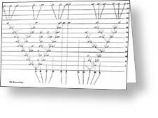 Darwins Scheme For Evolution Of Species Greeting Card