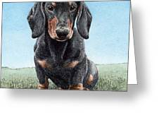 Daschund Greeting Card