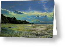 Dash Point State Park Greeting Card