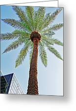 Date Palm In The City Greeting Card