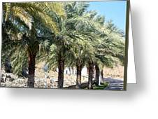 Date Palms Greeting Card