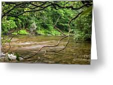 Davidson River Greeting Card