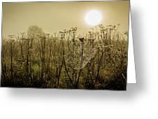 Dawn Dew Greeting Card