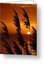 Dawn Grasses Greeting Card