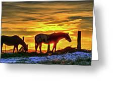 Dawn Horses Greeting Card
