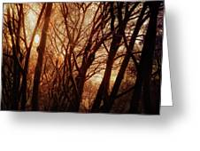 Dawn In The Trees Greeting Card