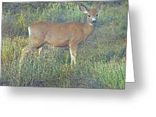 Dawn Names The Deer Greeting Card